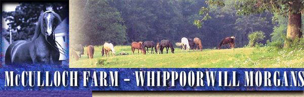Whippoorwill Duke in his prime and band of broodmares on crest of hill